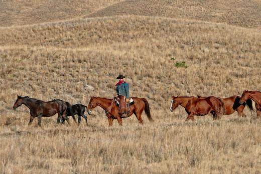 Ковбой на лошадях