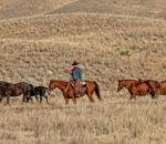 Пастух ковбой на лошади