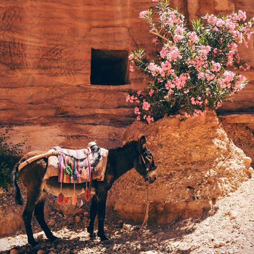 Осел и розы