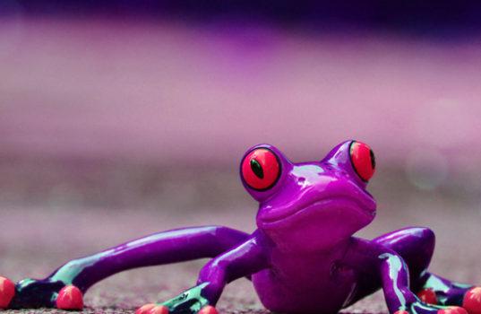 Красивый лягушонок / © pixabay.com